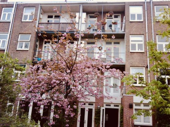 Prachtig gemeubileerd 3-kamer appartement met dakterras, gelegen in de IJselstraat in de  Rivierenbuurt